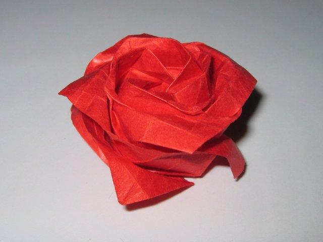 Kawasaki_Rose